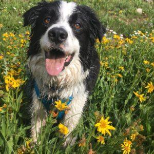 barley dog doesn't like puppies