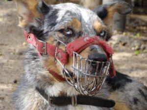 dog muzzle management training
