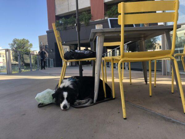 barley tuck under chair