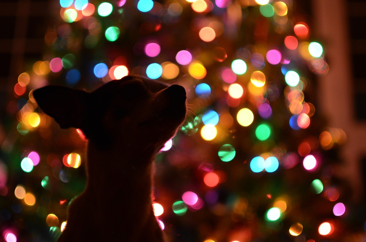 dog trainer gifts christmas puppy lights