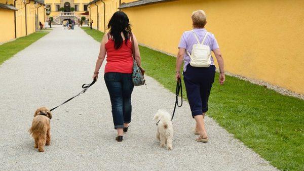loose leash walk