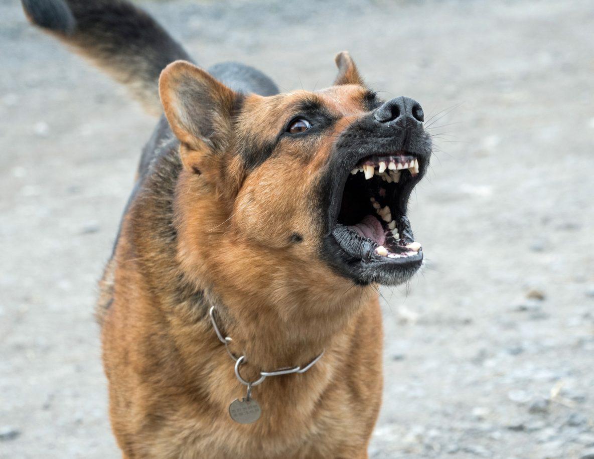 dog bark and lunge reactive dog