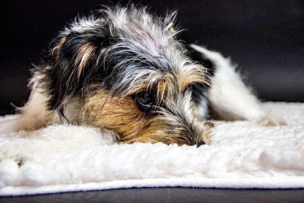 is my dog racist sad scared
