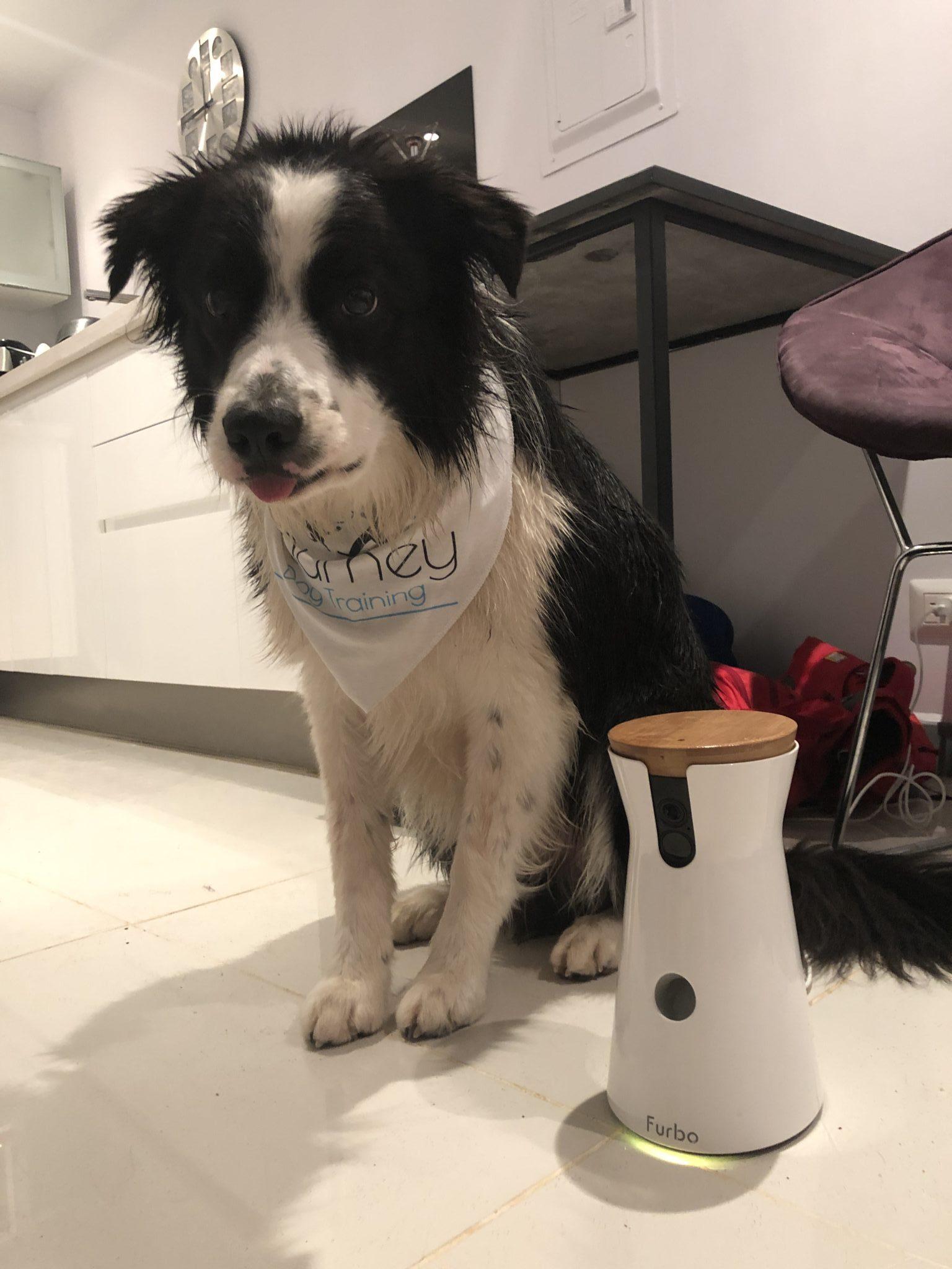 furbo journey dog training
