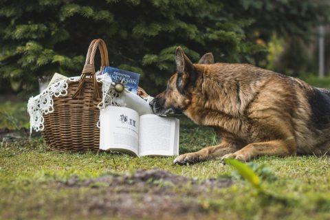 The Journey Dog Training Blog   Journey Dog Training