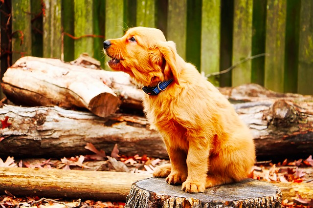 dog separation anxiety causes and prevention