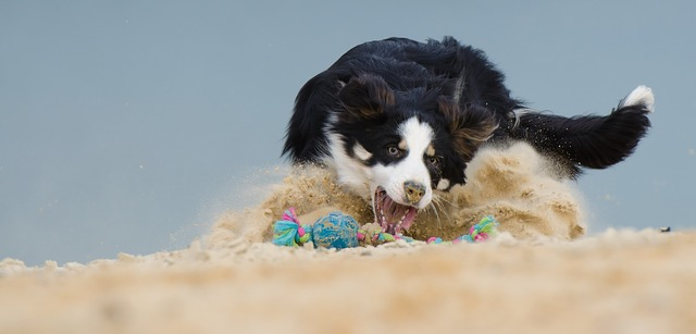 dog barks during playtime