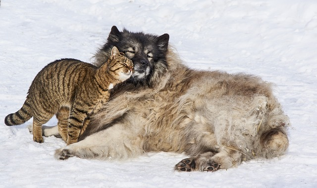 dog with high prey drive cat