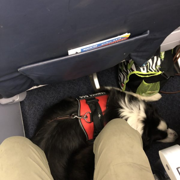 service dog tucked under airplane seat