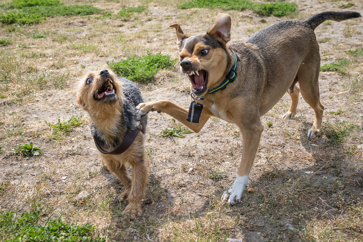 dog aggressive to other dogs