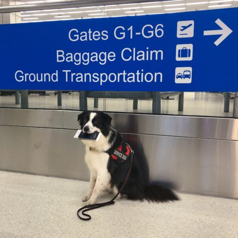 flying internationally with service dog