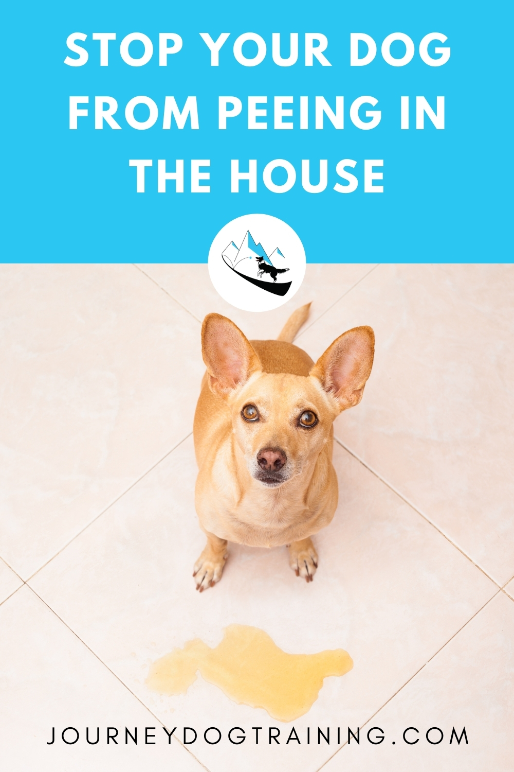 how to stop your dog from peeing in the house | journeydogtraining.com