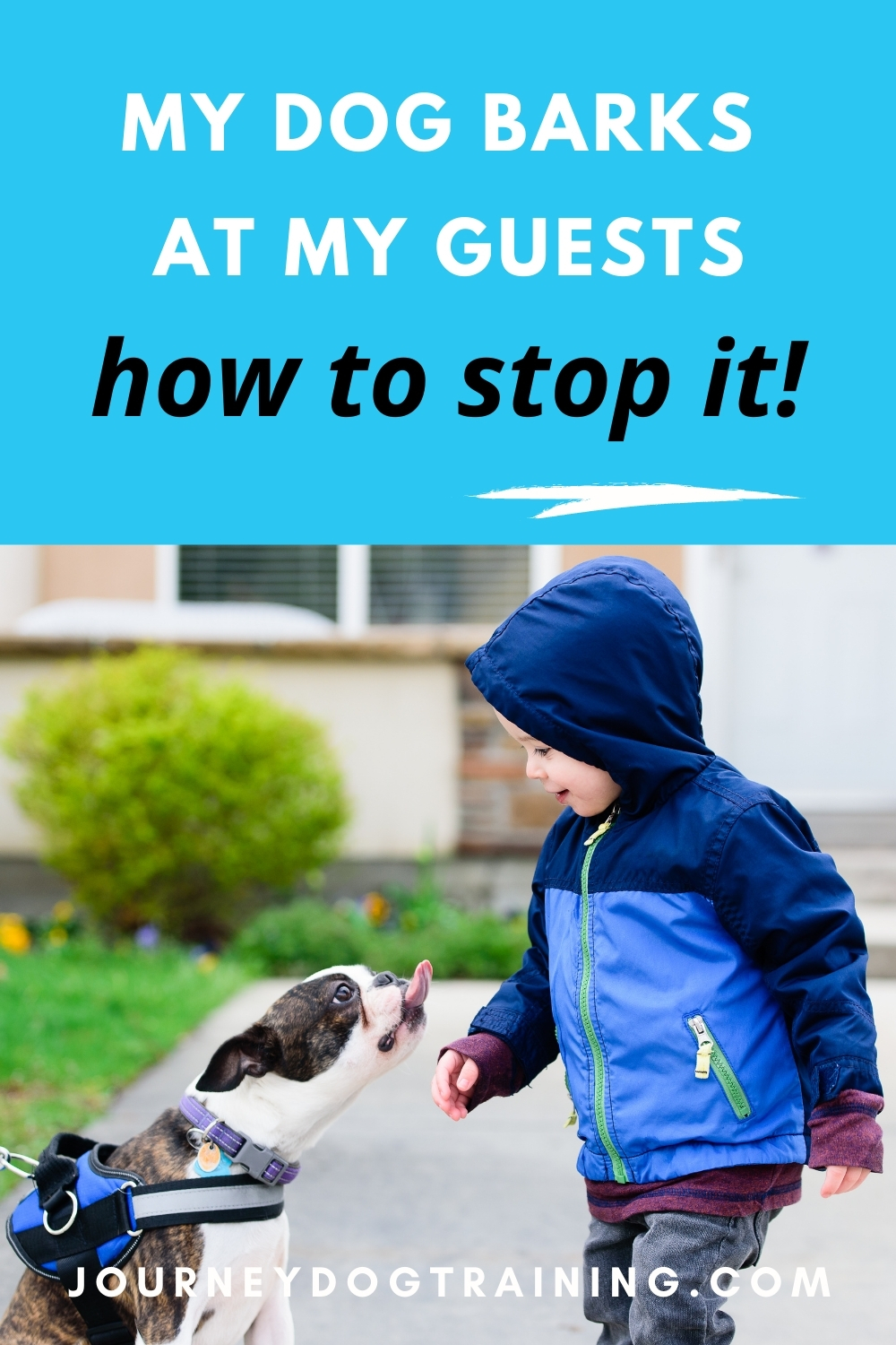 my dog barks at my guests and how to stop it | journeydogtraining.com