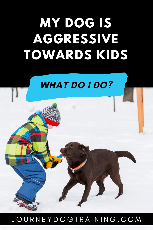 What do I do if my dog is aggressive towards kids? | journeydogtraining.com