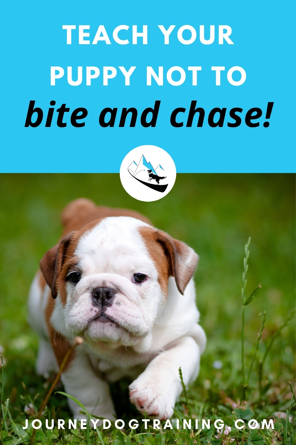 teach your puppy not to bite and chase | journeydogtraining.com