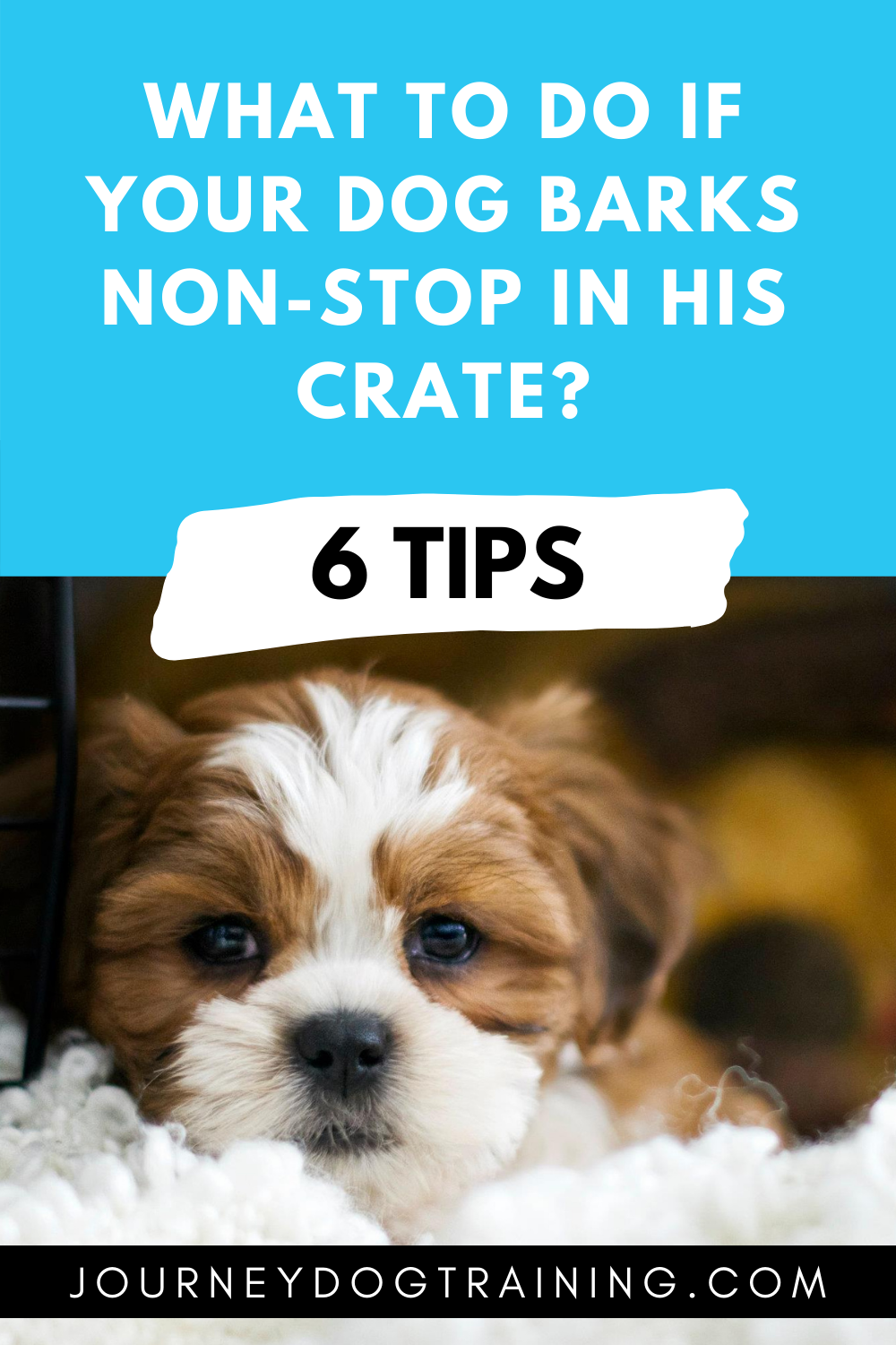 What to do if your dog barks non-stop in his crate? Click through to learn my 6 tips to train your dog how to relax and stop barking in his kennel. #cratetraining #dogtraining journeydogtraining.com