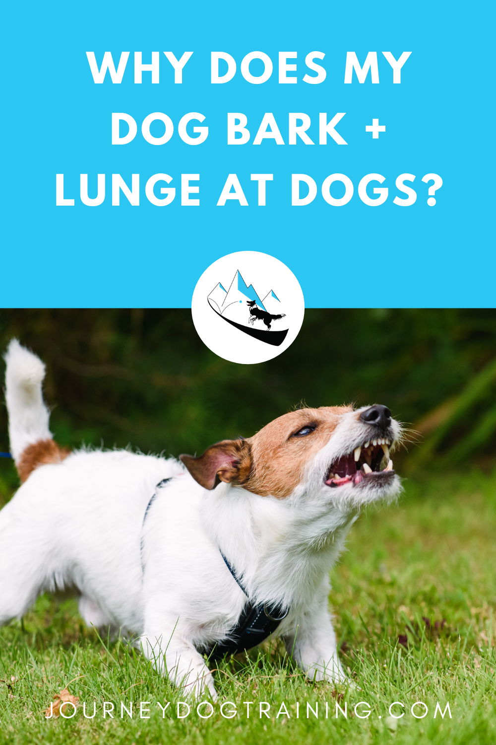 Why does my dog bark and lunge at other dogs? | journeydogtraining.com