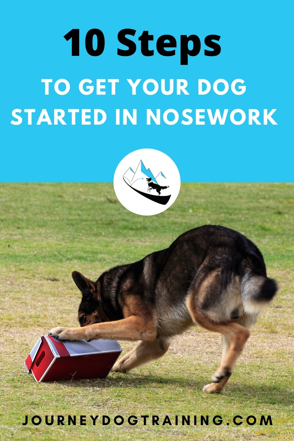 10 steps to get your dog started in nosework | journeydogtraining.com