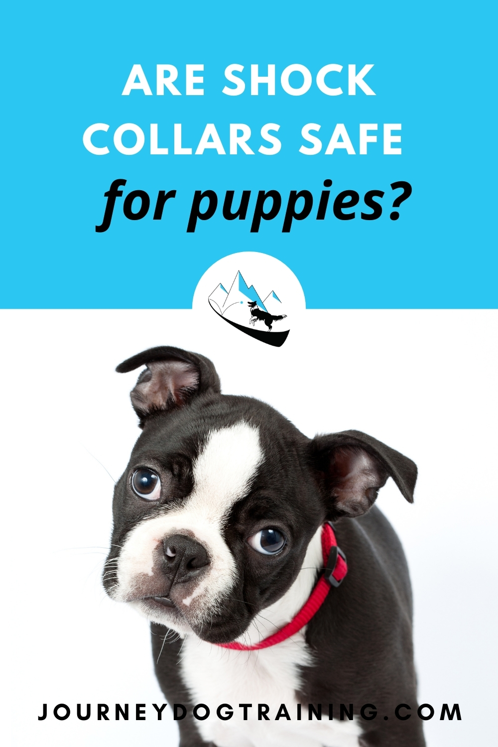 are shock collars safe for puppies | journeydogtraining.com