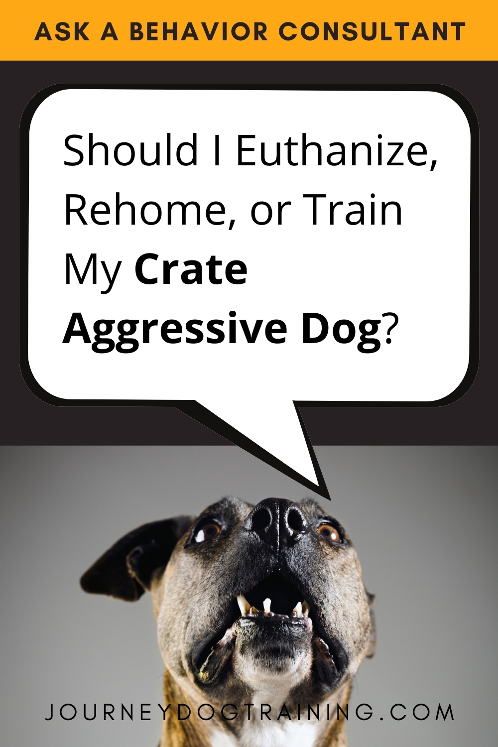 Ask a Behavior Consultant: should I euthanize, rehome or train my crate aggressive dog? https://journeydogtraining.com/crate-aggression/