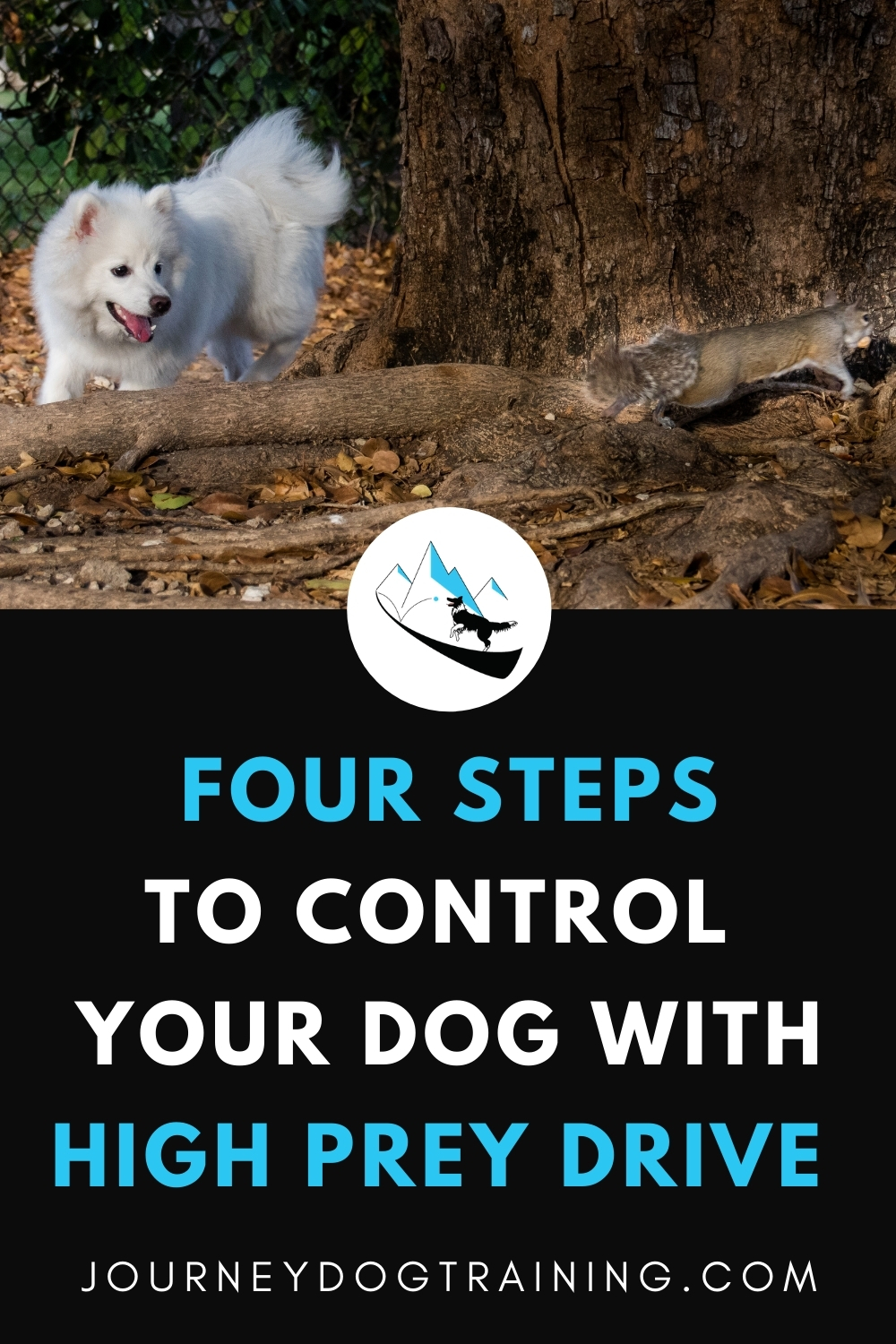 four steps to control your dog with high prey drive |journeydogtraining.com