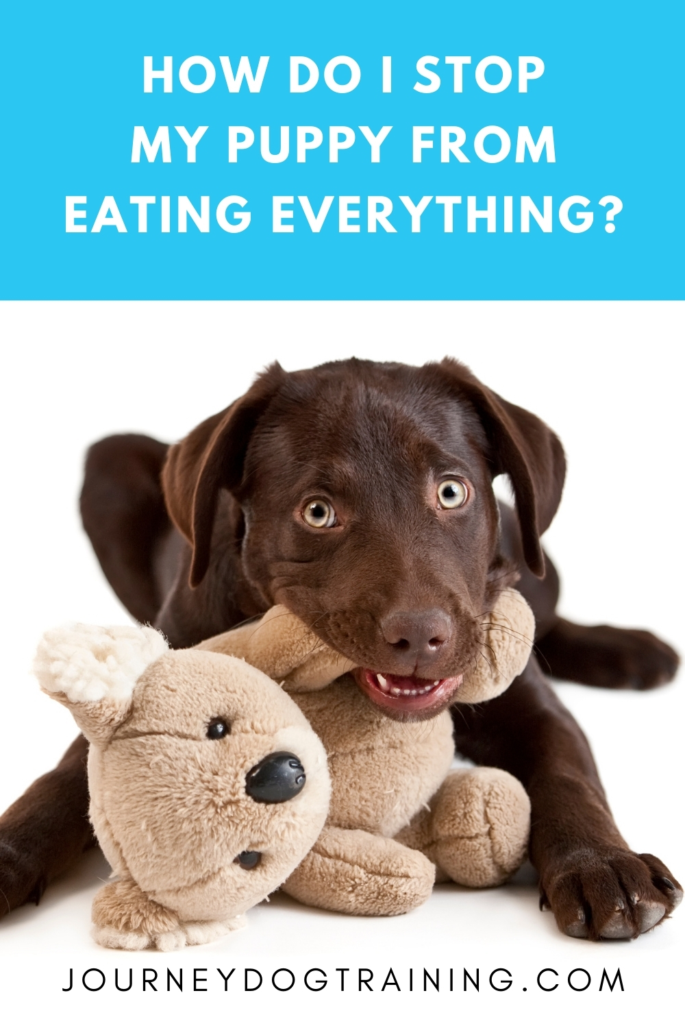 How do I stop my puppy from eating everything? | journeydogtraining.com