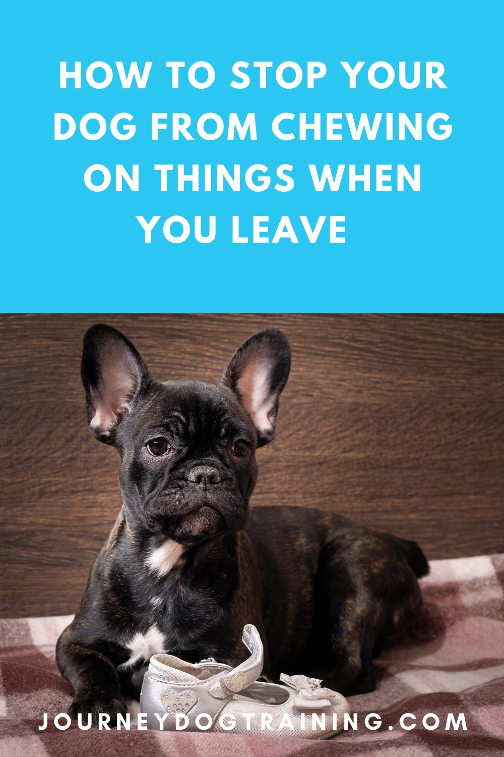How to stop your dog from chewing on things when you leave the house | journeydogtraining.com