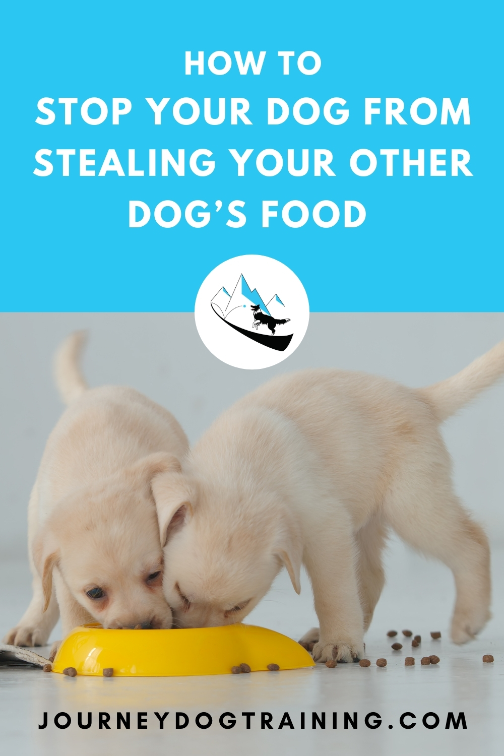 How to stop your dog from stealing your other dog's food. Dogs aren't really good at sharing. So what do you do if one of your dogs has a bad habit of stealing food from your other dogs? The situation gets even trickier if your dog will growl when you try to take food away. So how do you stop this behavior - safely?https://journeydogtraining.com/dog-steals-food-from-other-dogs/
