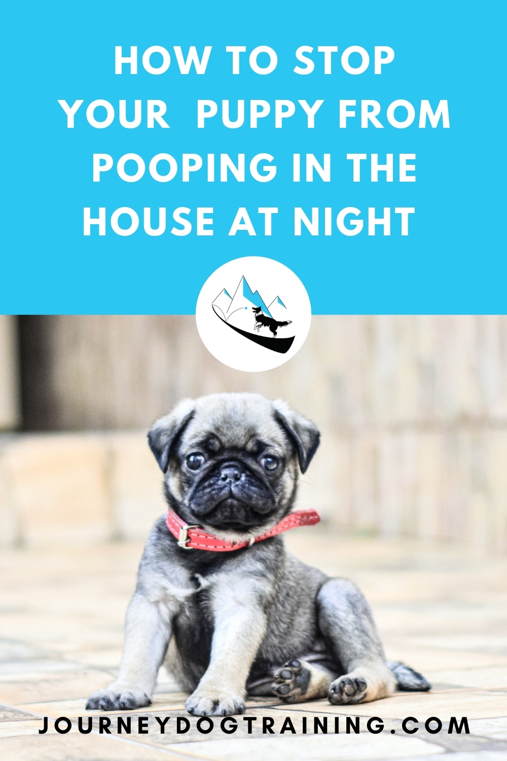 how to stop your puppy from pooping in the house at night | journeydogtraining.com