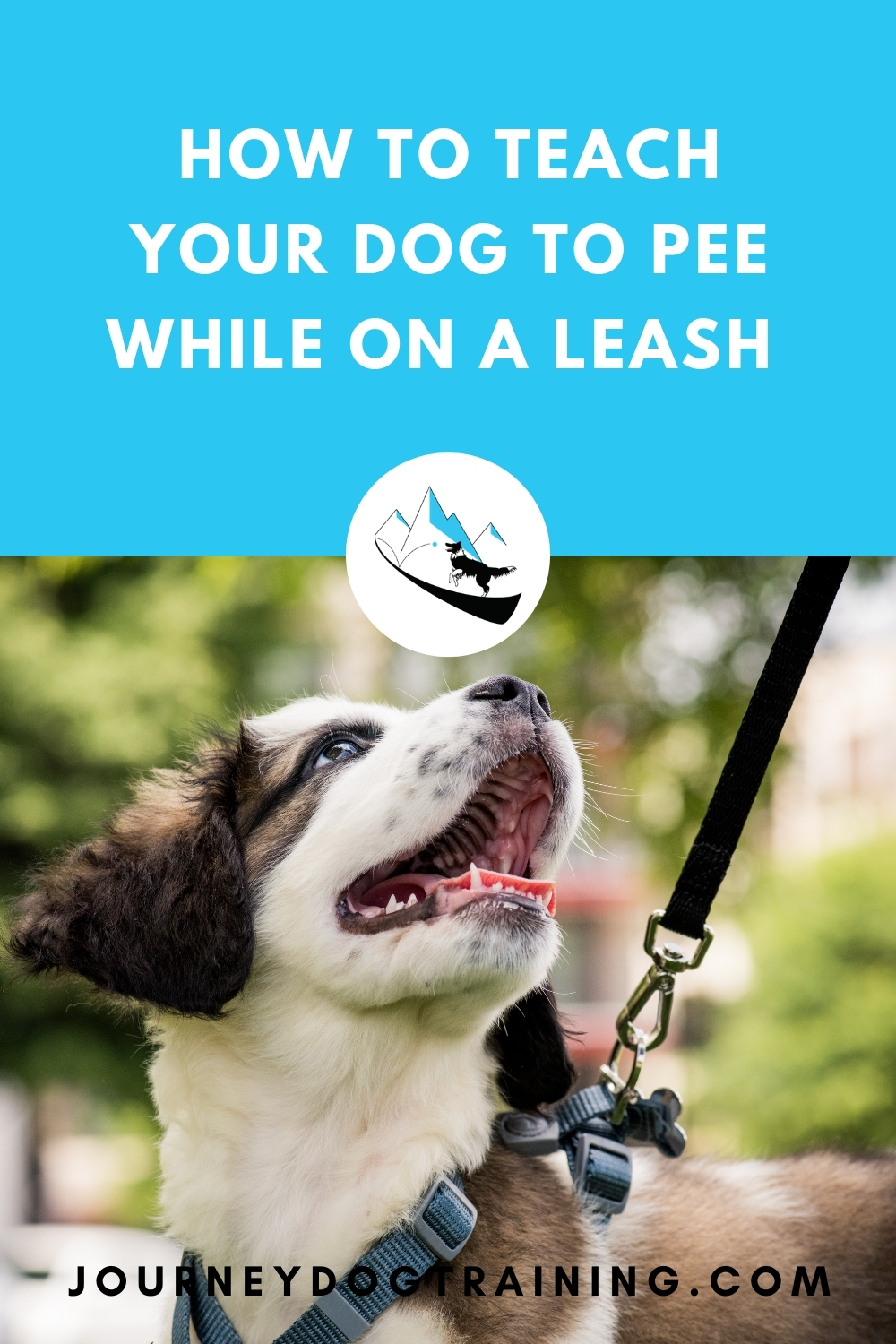how to teach your dog to pee while on a leash | journeydogtraining.com