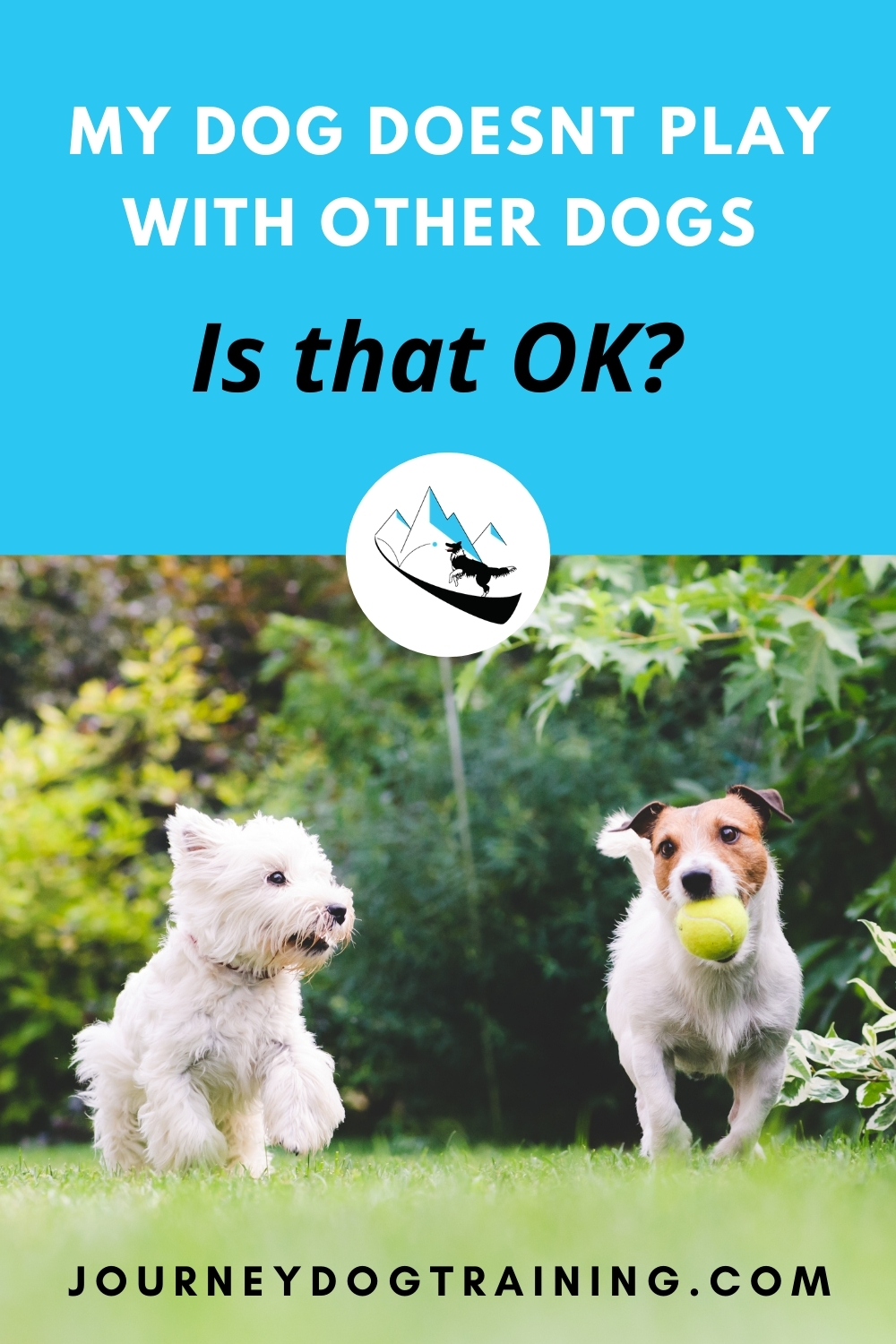 """My dog doesn't play with other dogs. Is that ok? It can be confusing and frustrating (and even downright embarrassing) to own a socially awkward dog. In today's """"Ask a Behavior Consultant"""" we address the problem of a dog who not only doesn't want to play with other dogs - this dog is downright uncomfortable with the idea of OTHER dogs having fun! Keep reading:  https://journeydogtraining.com/socially-awkward-dog/"""