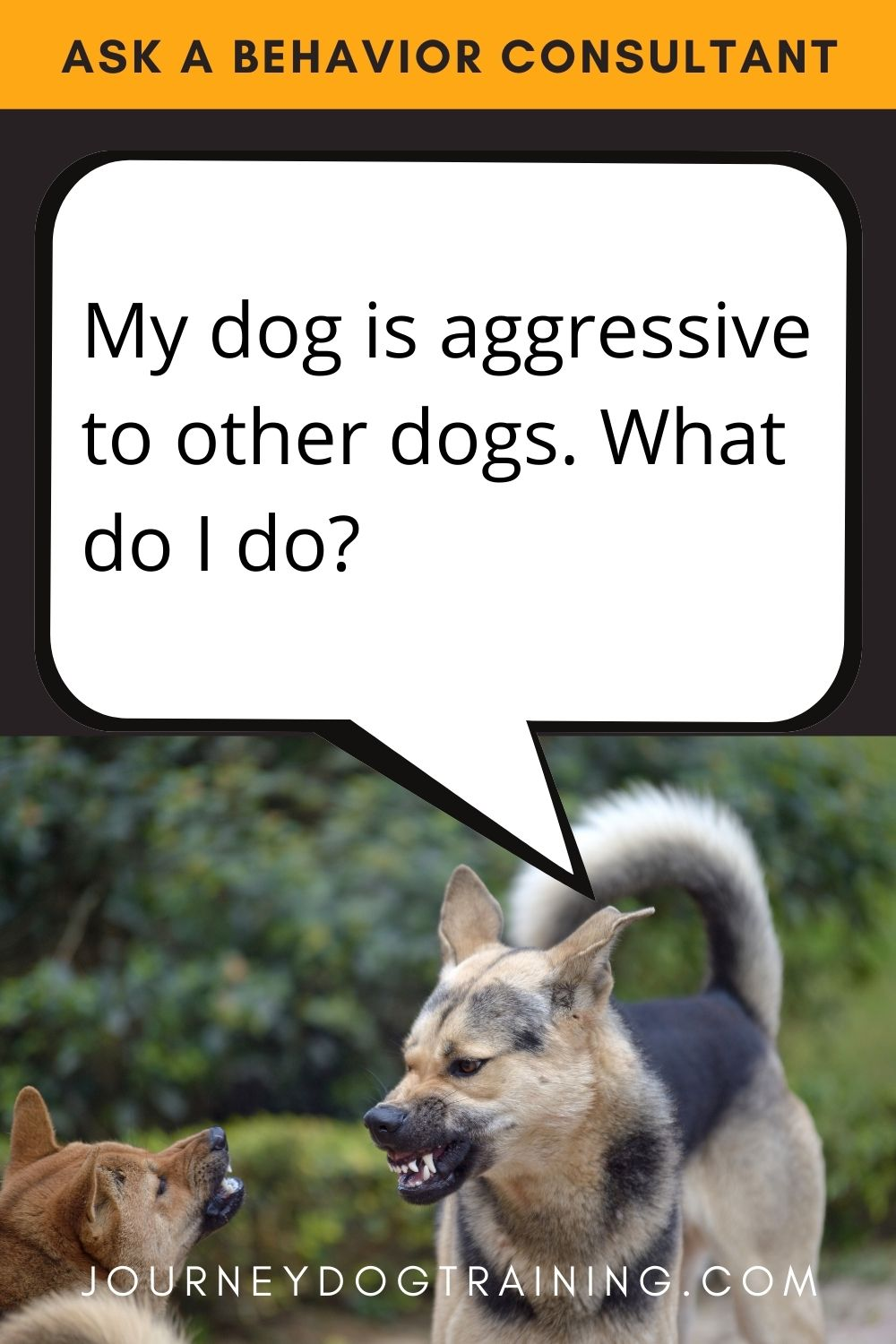 journey dog training | My dog is aggressive to other dogs. What should i do? | journeydogtraining.com